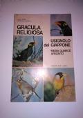 GRACULA RELIGIOSA USIGNOLO DEL GIAPPONE