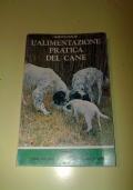 COME ALLEVARE E ADDESTRARE IL COCKER SPANIEL INGLESE -cinofilia-cane da caccia-cani-veterinaria-storia-scelta-educazione-addestramento-allevamento-cacciatore-tartufo