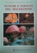 Funghi e tartufi del Maceratese