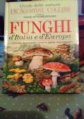 FUNGHI D'ITALIA E D'EUROPA