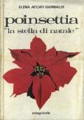 Poinsettia La stella di natale