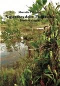 NEPHENTES DELLA THAILANDIA