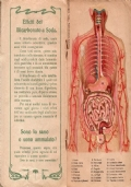 Disturbi dello stomaco e dell'apparato digerente. Con tavola anatomica mobile a colori