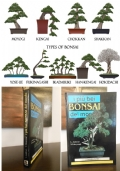 i più bei BONSAI del mondo, L. Ambrosi Y. Takayanagi, F.lli MELITA Editori 1995.