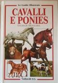 Cavalli e ponies
