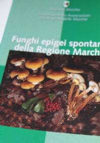 Funghi della Selva di Castelfidardo