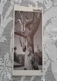 FOTOGRAFIA PROFESSIONALE il digitale in bianco e nero
